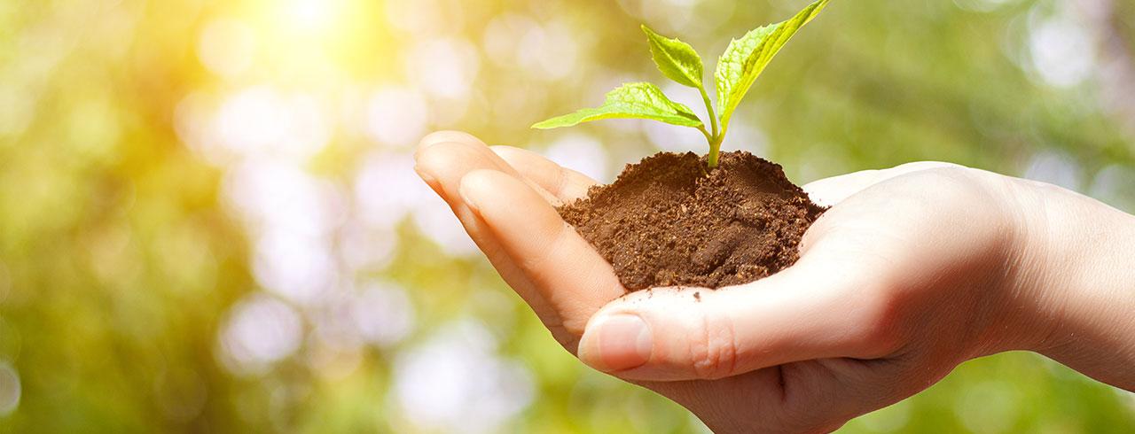 Manig & Palme - Nachhaltigkeit
